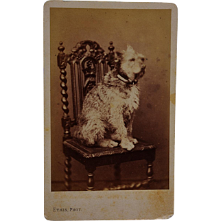 Antique French CDV Photograph ~ Large Terrier