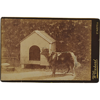 Antique Cabinet Photograph ~ Dog And His House