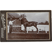 Antique CDV Photograph ~ Beautiful Horse