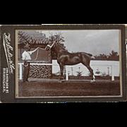 Antique CDV Photograph ~ Beautiful Horse