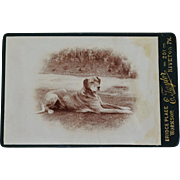 Antique Cabinet Photograph ~ Recumbent Dog