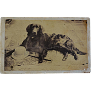 Antique CDV Photograph ~ Handsome Dog With Hat And Cane