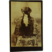 Antique Cabinet Photograph ~ Attentive Dog