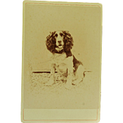Antique French Cabinet Photograph ~ Adorable Spaniel Dog