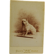 Antique Cabinet Photograph ~ Terrier Dog