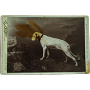Antique Cabinet Dog Photograph ~ Posing Hound