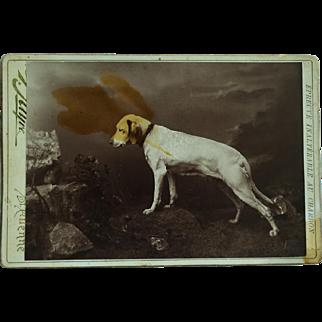 Antique Cabinet Dog Photograph ~ Posing Hound