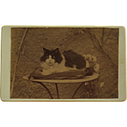Antique French CDV Photograph ~ Beautiful Cat