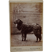 C1891 Antique Cabinet Photograph ~ Large Dog