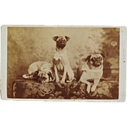 Antique CDV Photograph ~ Pug Dog Trio