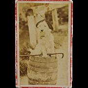 C1887 Antique CDV Photograph ~ Adorable Dog