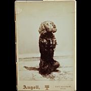 Antique Cabinet Photograph ~ Begging Retriever Dog