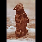 Antique Cabinet Photograph ~ Begging Dog