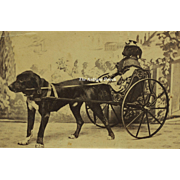 Antique CDV Photograph ~ Rare Image Of Dressed Dog In Cart Pulled By A Dog