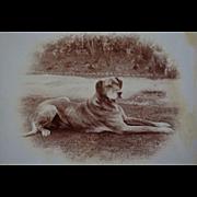 Antique Cabinet Photograph ~ Recumbent Dog