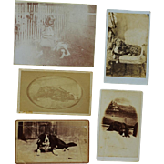 Grouping Of Antique Dog CDV Photographs