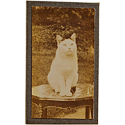 C1910 Antique French Cat Photograph