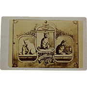 Antique French Cat Advertisement CDV Card