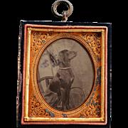 Antique Dog Tintype Photograph