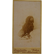 Antique French Mini CDV Dog Photograph ~ Black Poodle