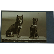 Antique CDV Dog Photograph ~Sweet Terriers