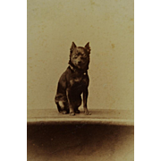 Antique CDV Dog Photograph ~ Adorable Terrier