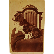 Antique Cabinet Photograph ~ Spaniel Dog
