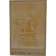 Antique Cabinet Photograph ~ Dog On Wicker Chair