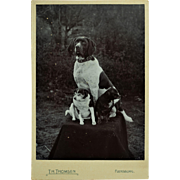 Antique Cabinet Photograph ~ Hound And His Dog Friends