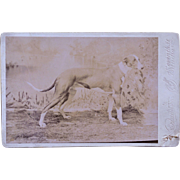 Antique Cabinet Photograph ~ Greyhound Dog
