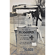 """WW1 Canadian Red Cross Collection Dog """"Muggins"""" Paper Photograph"""