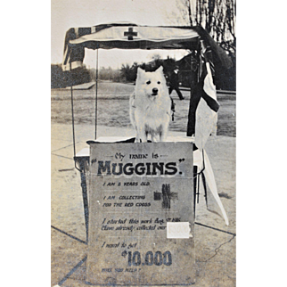 "WW1 Canadian Red Cross Collection Dog ""Muggins"" Paper Photograph"