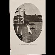 """Antique Postcard ~ J. W. Gorman's High Diving Horse """"Queen"""""""