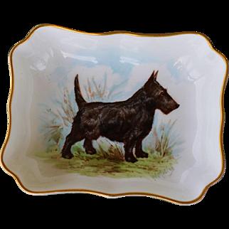 Scottish Terrier Dog Royal Crown Derby Porcelain Pin Dish #2