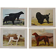 "C1890 ~ 4 Chromolithographs From ""The Illustrated Book of the Dog"""