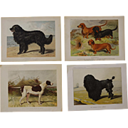 "C1890 ~ 4 Chromolithographs From ""The Illustrated Book of the Dog """