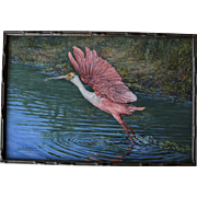 Oil Painting Flying Roseate Spoonbill At Celery Fields Florida