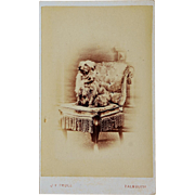 """Antique CDV Dog Photograph ~ """"King Of The Chair"""""""