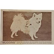 "WW1 Collection Dog ""Muggins"" Postcard"