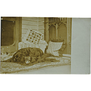 Antique RPPC Postcard ~ Dog On Bear Skin Rug