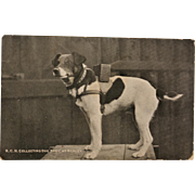 "WW1 Postcard ~ Collecting For Charity Dog ""Spot"""