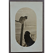 "Antique RPPC Postcard ~ Dog With Cat Friend ""Is There Room For Me"""
