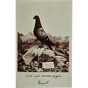 WW1 Postcard ~ Major Raynal's Homing Pigeon Vaillant