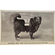 Antique Postcard ~ Bruce Of Swindon, Famous Collecting For Charity Dog #2