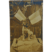French WW1 Patriotic Dog RPPC Postcard ~ Vive La France