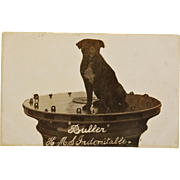 "WW1 Postcard ~ ""Buller"" H.M.S. Indomitable Dog Mascot"