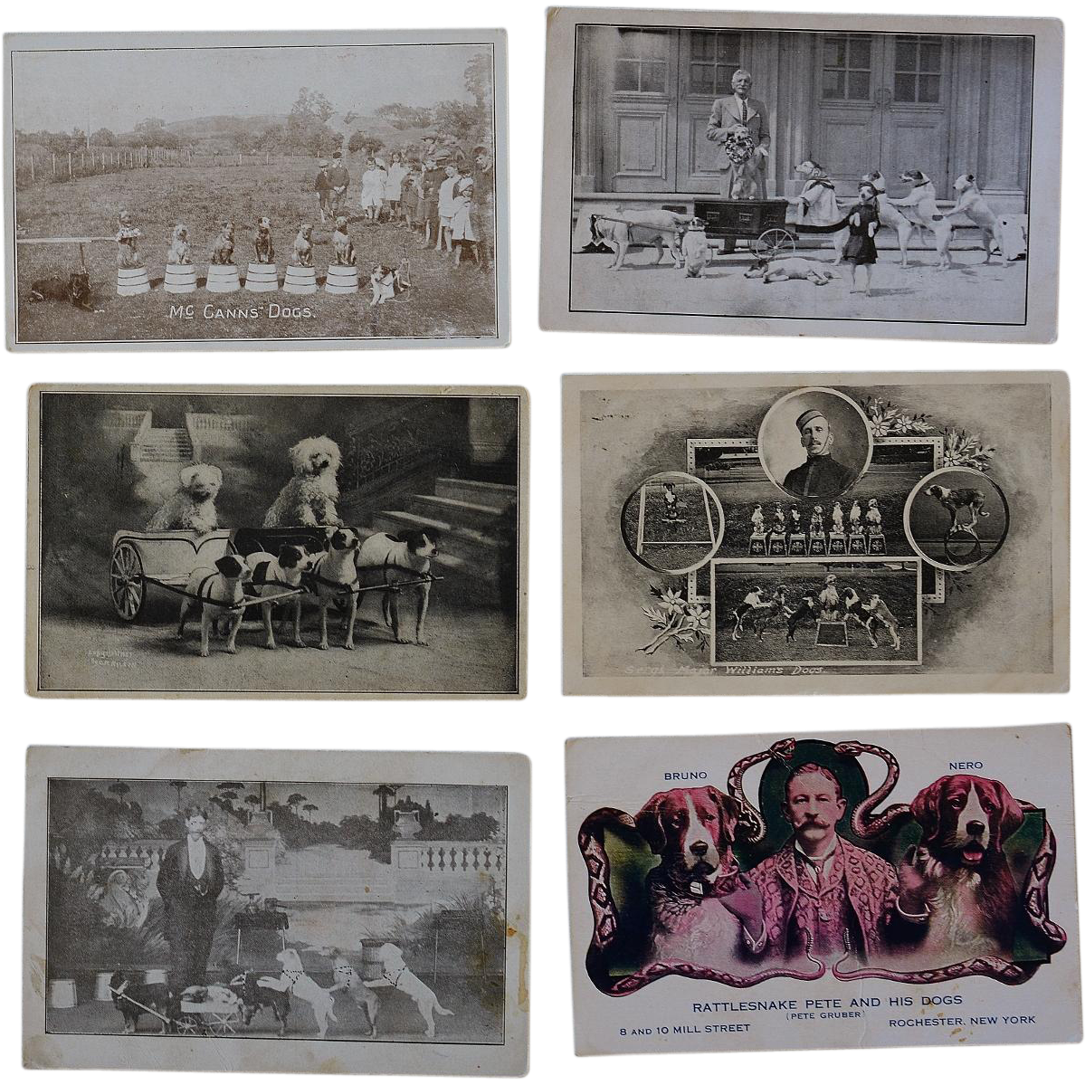 6 Antique Postcards C1907 ~ Performing Circus Dogs - Red Tag Sale Item