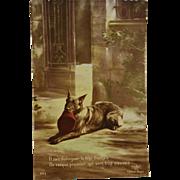 WW1 French Postcard ~ Shepherd War Dog
