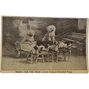 Antique Postcard ~ Linn's Famous Educated Dogs