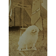 RPPC WW1 Dog Mascot Postcard
